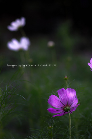 SDIM3978-001.jpg